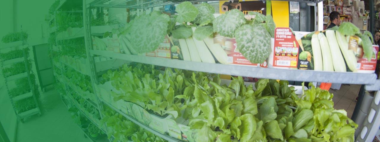 piante-servizi