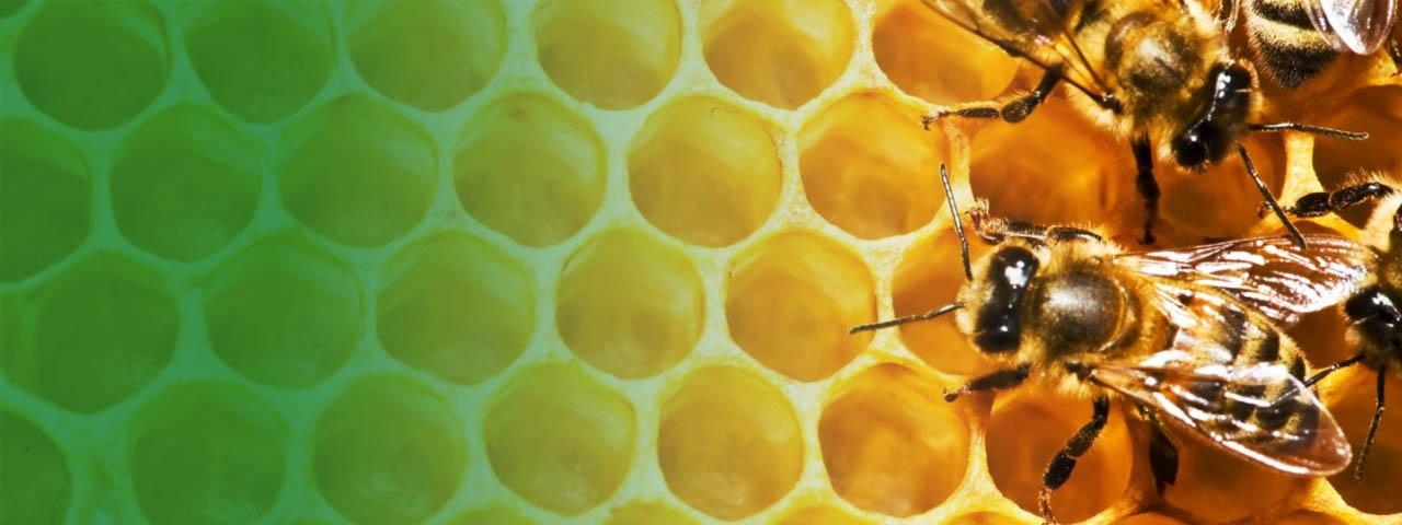 apicoltura-servizi