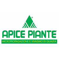 apice-piante